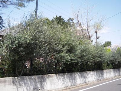 20100408 001-1.jpg