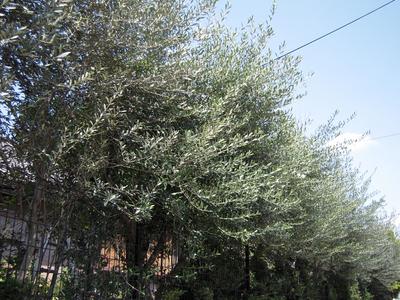 20100408 012-1.jpg