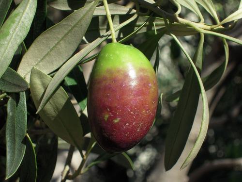 2012-11-25 Jカラ収穫① 006-1.jpg