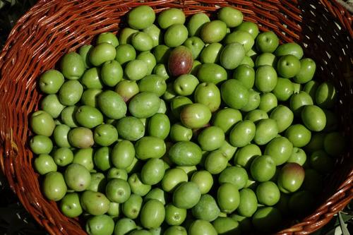 20130929 収穫1 S 004-1 マンモス2.jpg