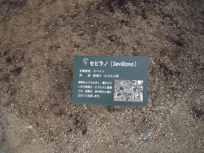 20081102 小豆島2 035-1.jpg
