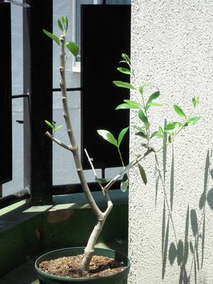 20110515 005 アスコ2-1.jpg