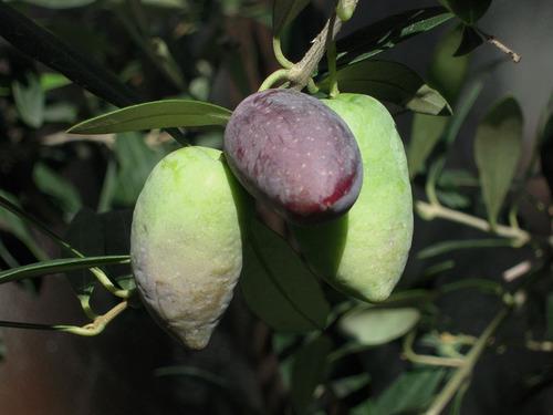 2012-10-21 2012収穫2 005-1.jpg