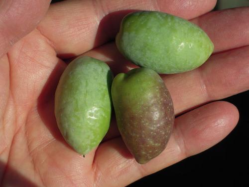 2012-10-21 2012収穫2 015-1.jpg