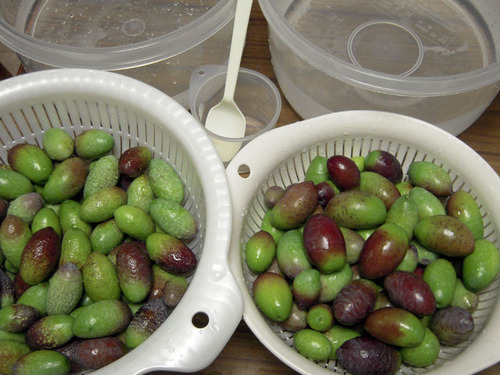 2012-11-25 Jカラ収穫① 018-1.jpg